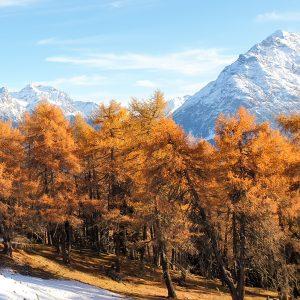 Intakte Umwelt Wald und Berge